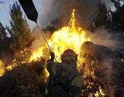 آتش در جنگلها، واگذاری در منطقه حفاظت شده