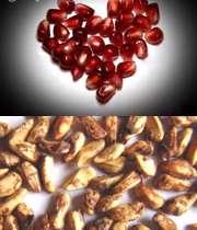 حتی دانه انار هم مفید است