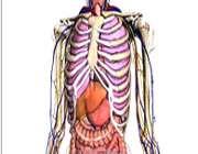 استخوان بندی