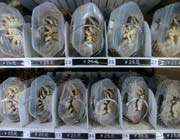 distributeur automatique de crabes dans le métro à nanjing