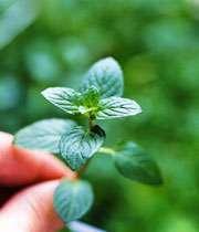 مهارت هایپرورش گیاهان