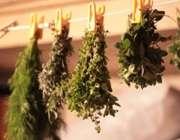 شرایط مناسب جمع آوری و خشک کردن گیاهان دارویی در منزل