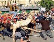 شترسواران برای سرکوب مردم و اغتشاش در مصر به دستور شاهزاده