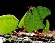 مورچه های بازنشسته
