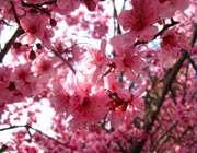 تا بهار سبزههای عطر