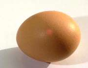 تخم مرغ شناور
