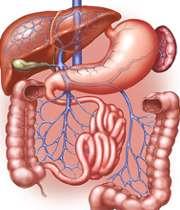 اندام های دستگاه گوارشی انسان