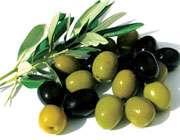 زیتون سیاه و سبز