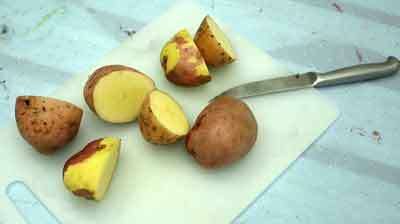 مهر سیب زمینی