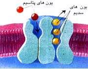 3 فایده ی مهم پتاسیم برای بدن