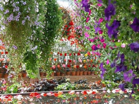 Цветы оранжерейные фото и название