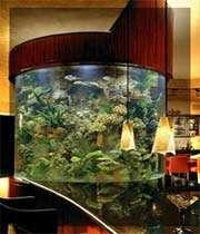 أحواض السمك