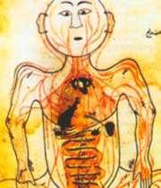 l'anatomie du corps