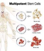 درمان با سلول بنیادی