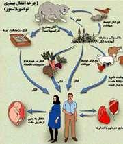 بیماری توکسوپلاسموز
