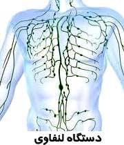 دستگاه لنفاوی بدن