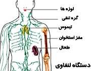 سرطان لنفاوی
