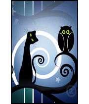 owl cat