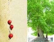سفر به بزرگترين باغ انار جهان