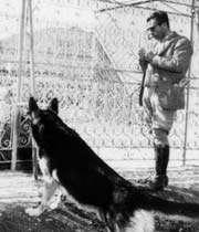 سگ بازیهای یک شاه+عکس
