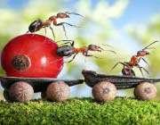 داستان مورچهها