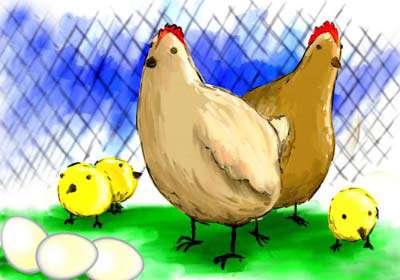 مرغ قشنگ من
