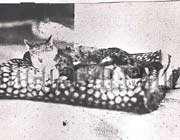 سرشناس ترین گربه ناصرالدین شاه