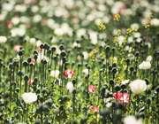 قیامت گیاهان چگونه است؟
