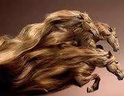 تقویت و زیبایی موها با عسل