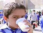 توزیع شیر در مدارس گناوه آغاز شد