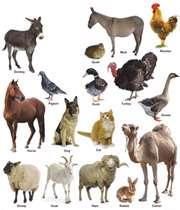 حیوانات اهلی را بشناسید