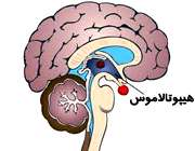 اختلال هیپوتالاموس چه علائمی دارد؟