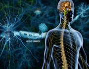 خبرهای خوب از سلول درمانی MS