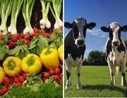 سیریِ جهان با کشاورزی ارگانیک!