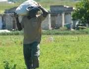 کمردرد و کشاورزی