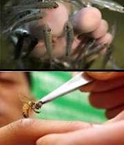 دکتر ماهی، دکتر زنبور