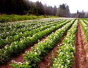 عملکرد عناصر ضروری در متابولیسم گیاهان