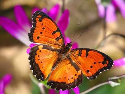دست کسی به پروانه نمی رسد ...