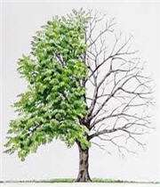 درخت و قسمتهای مختلف آن