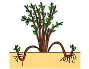 تولید مثل در گیاهان