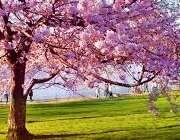 حفظ سلامت در بهار با طب سنتی