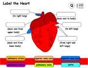 بخش های مختلف قلب