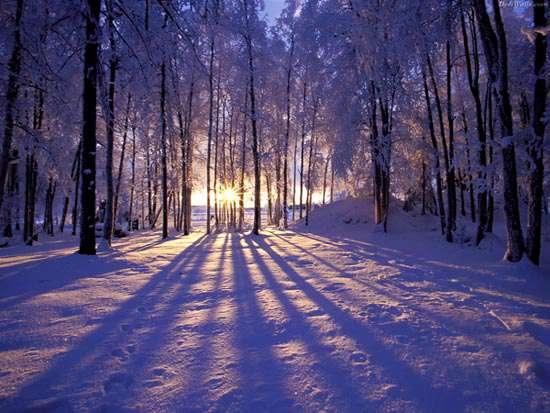 جنگل برفی