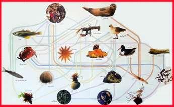 عکس شبکه غذایی حیوانات