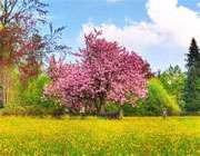 بهار، بهار چه اسم آشنایی