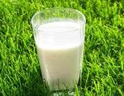 شیر گیاهی