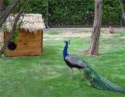 сад птиц в исфагане