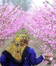 حیف است بهار باشد و تو نباشی