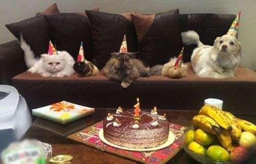 جشن تولد سگ ها در پایتخت