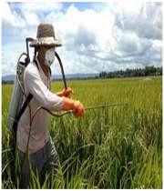 آفت های کشاورزی